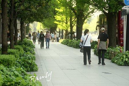 新緑の舗道・・marunouchi