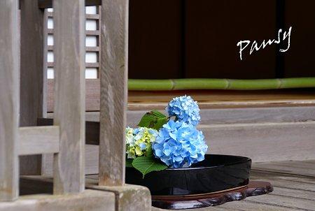 明月院 blue・・11