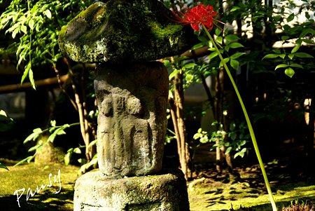 鎌倉 曼珠沙華の彩・・2