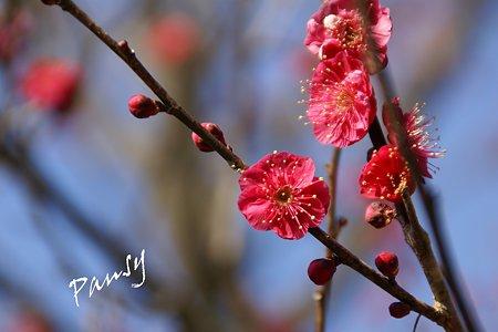 浄妙寺に咲いて・・3