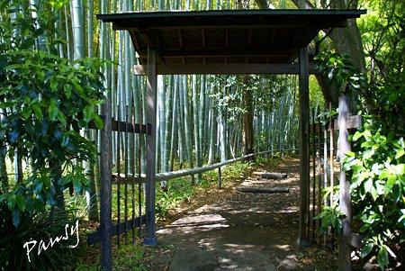 若竹の林へ・・