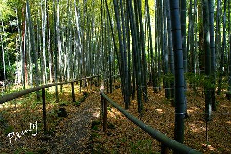 竹の木漏れ日の道・・