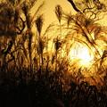 写真: ススキと夕景