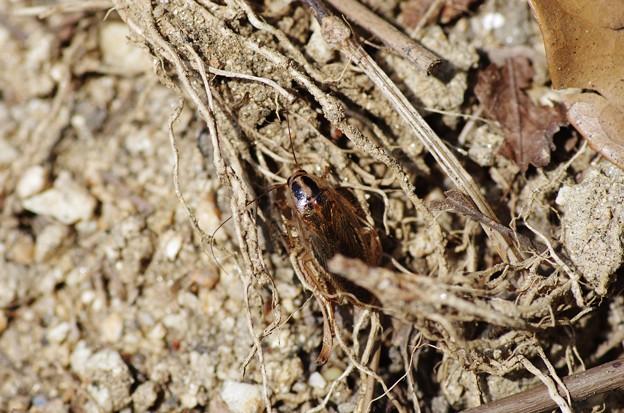 ゴキブリ?2