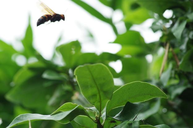 アシナガバチではなさそう