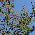 Photos: 秋空と少し紅葉