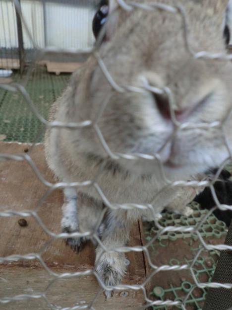 Photos: のぞき込むウサギ?
