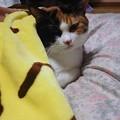Photos: 秋の夜の猫