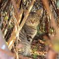 Photos: 公園の子猫3