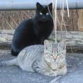 Photos: 公園の子猫4