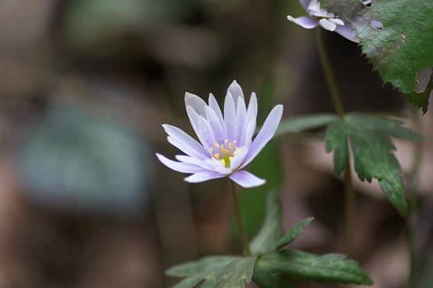 一華の花(2)