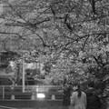 Photos: お花見~(^^♪