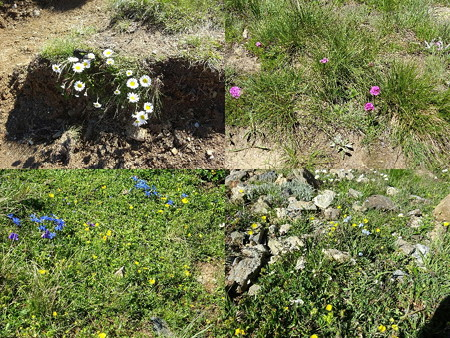 160718-14花々3