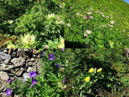 160720-08花々6