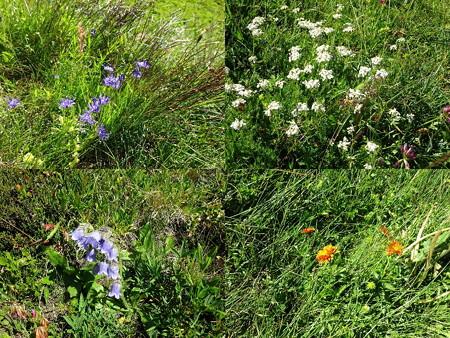 160720-11花々7