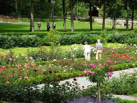 160721-17バラ公園