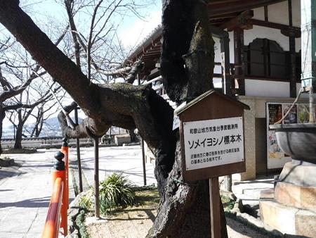170204-10標準木