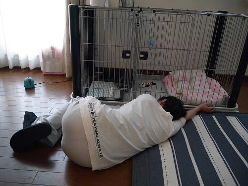 オーナーのうたた寝