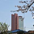 Photos: 桜とニンジン2
