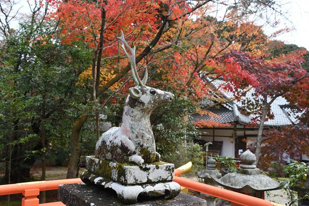 大原野神社の狛鹿(雄鹿)