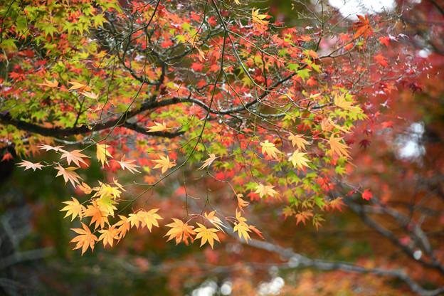 大原野神社の紅葉