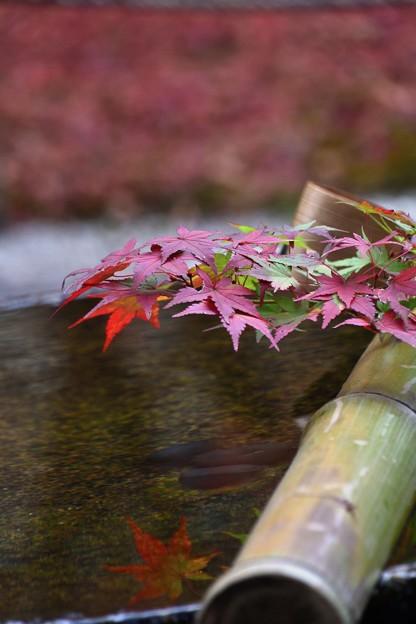 圓光寺手水鉢に映る