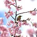 Photos: 青空と花の香りに包まれて