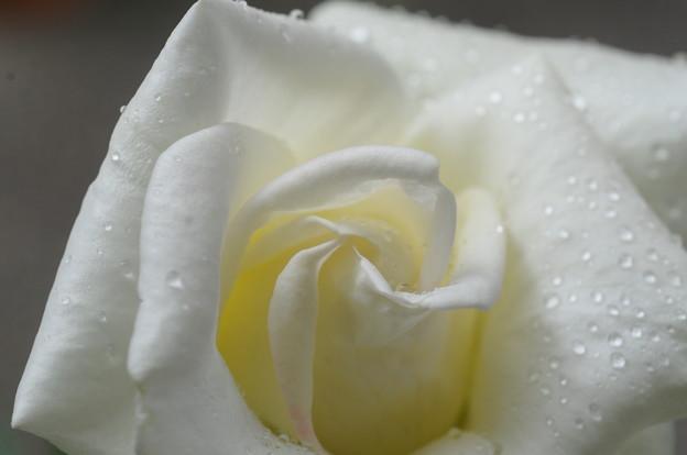 フォト蔵ジョンFケネディ8アルバム: 四季の風物詩 (8950)写真データみなみたっち(少しず...さんの友達 (74)フォト蔵ツイート