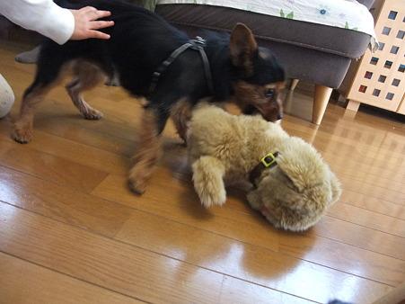 電動の犬と格闘