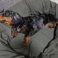 Photos: 大きなベッドで寝てみたり^^