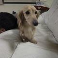 Photos: …(((((っ--)っ ソロリ…