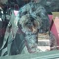 Photos: ボサボサの保護犬(ではありません)