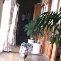 Photos: 帰ってくる紬・・・いや、春馬(なんでやねん)