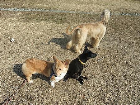 保護犬組み