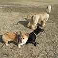 Photos: 保護犬組み