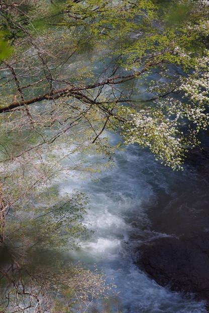 滝に解ける樹木