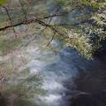 写真: 滝に解ける樹木