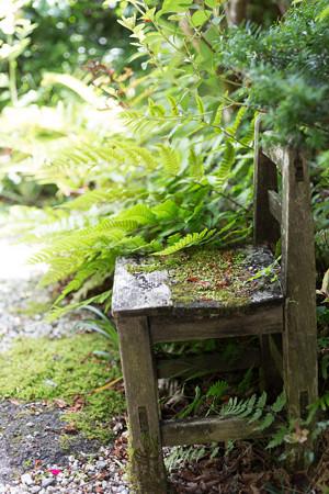 自然化する椅子