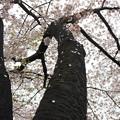 春風の足跡