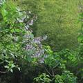 九品の滝3