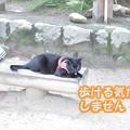 伊賀上野公園3