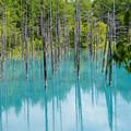 青い池-6