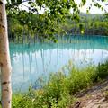 青い池-3