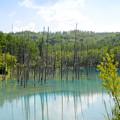 Photos: 青い池-2