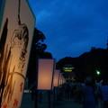 写真: 参道の猫20140807