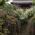 写真: 紅白の萩の花と山門!201409