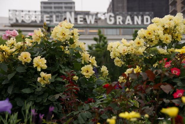 写真: 春バラとホテル20160528b