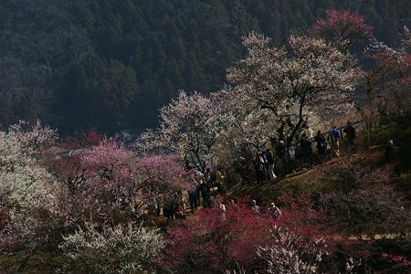 梅の花見!(100314)