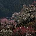 Photos: 梅の花見!(100314)