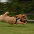 Photos: 全速力